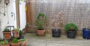 10 idées de brise-vues à installer dans son jardin