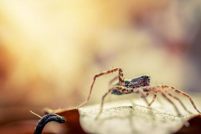 Les araignées : truc et astuces pour lutter contre