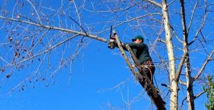 Elagage : quand, comment et pourquoi élaguer un arbre ?