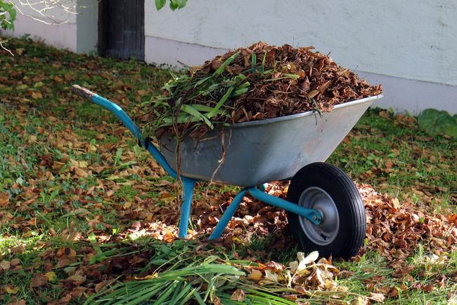 nettoyage du jardin à l'automne