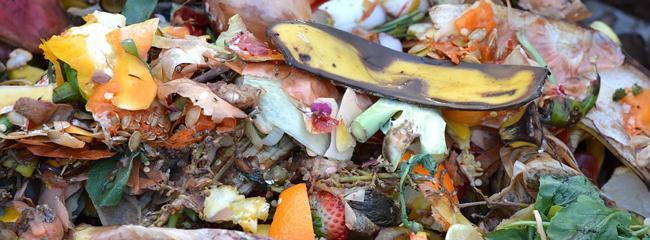 déchets qui vont au compost