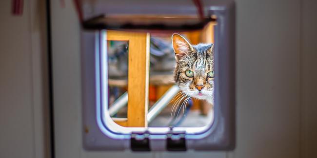 Quelle chatière choisir pour les va-et-vient de son chat ?