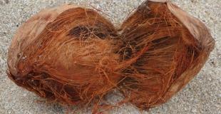 Quelles différences entre les sols en sisal, jonc de mer et fibre de coco ?