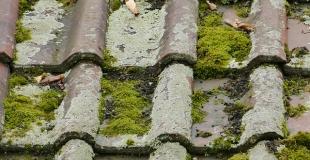 La mousse sur une toiture : comment s'en débarrasser ?