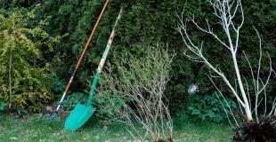 Quand faut-il planter les arbres ? Comment faire ?