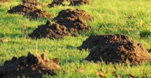 5 trucs et astuces naturels pour chasser les taupes du jardin